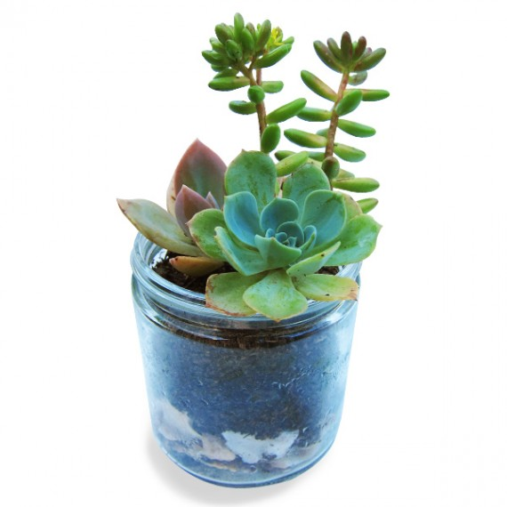 Succulent Kit, Find the Perfect Gift for Everyone Part II, @WeShopGab